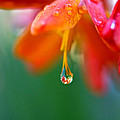 A Delicate Touch - Water Droplet - Orange Flower by Marie Jamieson