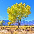 A Desert Autumn by Marilyn Diaz