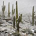 A Desert Blizzard  by Saija  Lehtonen