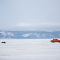 A Dog Chases After A Car On The Frozen by Olivier Renck