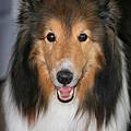 A Dog Named Beau by Karen Adams