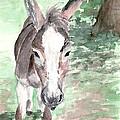 A Donkey Day by Elizabeth Harshman