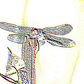 A Dragonfly In My Dreams by Jeff Swan