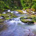 A Dream In The Stream  by Michael Ver Sprill