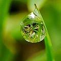 A Drop Of Water For Every Blade Of Grass by Anthony Walker Sr