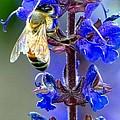 A European Honey Bee And It's Flowers by Carol Montoya