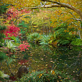 A Fall Afternoon by Mary Buck