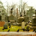 A Fall Gathering Of Crows by Gothicrow Images
