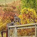 A Fall Photo by Brian Williamson