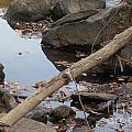 A Fallen Branch  by Lynnette Brashear