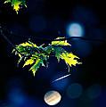 A Few Leaves In The Sun by Bob Orsillo