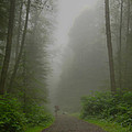 A Few Steps Into The Mist by Don Schwartz
