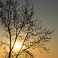 A Filigree Of Branches Framing The Sunrise by Georgia Mizuleva