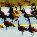 A Flock Of Geese by Bill Cannon