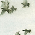 A Flock Of Pigeons 2 Watercolor Painting Of Birds by Beverly Brown Prints