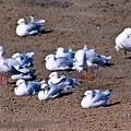 A Flock Of Seagulls by Darren Burton