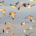A Flock Of Seagulls by Michael Allen