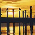 A Flock Of Seagulls by Roy Pedersen