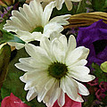 A Flower Basket by Pachek