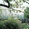 A Flower Bed In Mrs. Frank Audibert's Garden by Samuel H. Gottscho