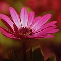 A Flower In A Shadow  by Jeff Swan
