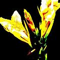 A Flower by Jeffery L Bowers