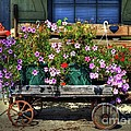 A Flower Wagon by Mel Steinhauer