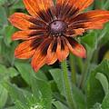 A Flower Within A Flower by Patricia Twardzik