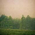 A Forest by Edward Fielding