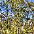 A Forest Glade by David Pyatt