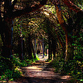 A Forest Path -dungeness Spit - Sequim Washington by Marie Jamieson