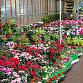 A French Flower Market by Olivier Le Queinec