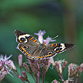 A Friendly Butterfly Smile by Thomas Woolworth