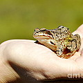 A Frog In The Hand by HHelene