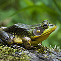 A Frog Is Forever by Christina Rollo