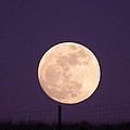 A Full Moon Behind My Fence by Jeff Swan