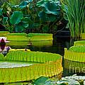 A Garden In Gentle Waters by Byron Varvarigos