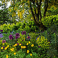 A Garden Of Color by Jordan Blackstone