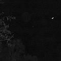 A Ghostly Crescent Moon by Terry Cobb
