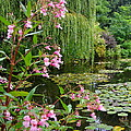 A Glimpse Of Monet's Pond At Giverny by Carla Parris