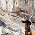 A Goat Hanging Out At The Base by Mike Schirf