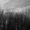A Grey Point Of View by Rhonda Barrett