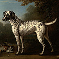 A Grey Spotted Hound by John Wootton