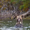 A Grizzly Cub Fishing by Bill Cubitt