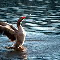 A Happy Goose by Barbara Fonseca