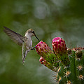 A Happy Little Hummer  by Saija  Lehtonen
