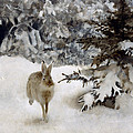 A Hare In The Snow by Bruno Andreas Liljefors