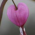 A Heart That Bleeds by Lyndsey Warren