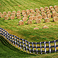 A Herd Of Hay Bales by Guy Shultz