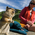 A Hiker Makes Friends With The Local by Cliff Leight